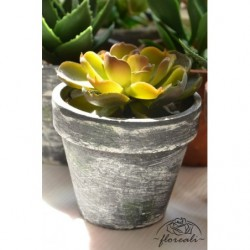 Kaktus, sukulent w doniczce